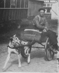 Figuur 3. Een hondenkar.