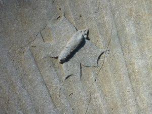Begraafplsst symboliek 4